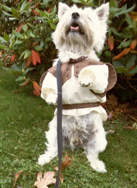 Cairn Terrier begs to be let out of his ogre costume!