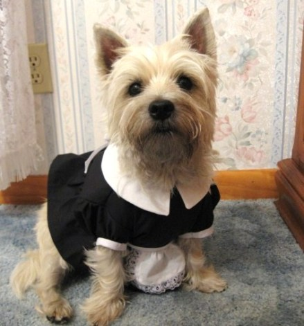 French Maid / Magenta Costume for dogs.