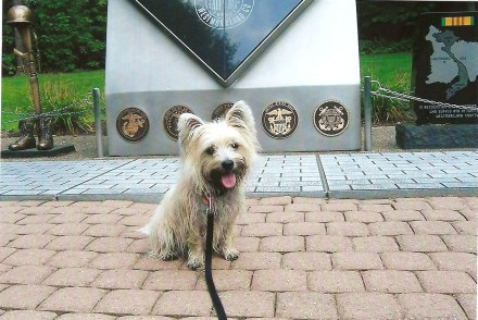 Cairn terrier in front of war memorial.
