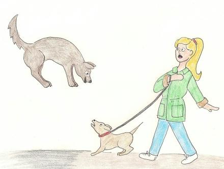 Geordie meets an energetic new friend on his walk.