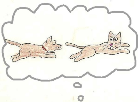 Dog chases frightened cat.