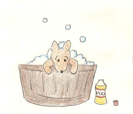 Puppy in a tub.