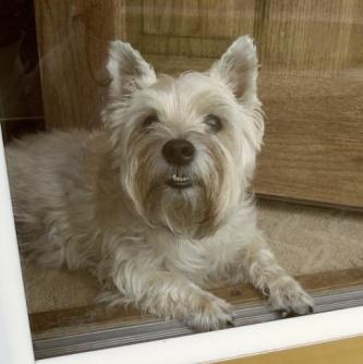 Puppy looking out of door.