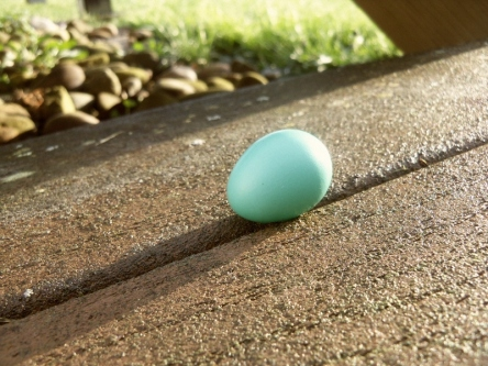 Robin's egg sitting on porch step.