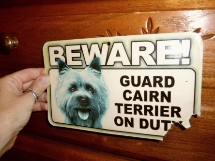 Beware! Guard Cairn Terrier On Duty