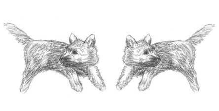 Twin Cairn terrier puppy sketches.