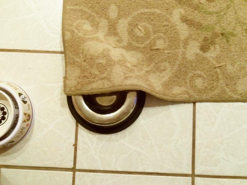 Dog dish half hidden under carpet