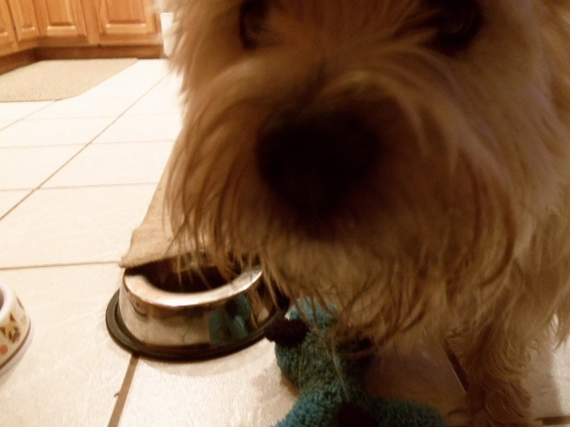 Dog photobombs picture with dish and toy in background