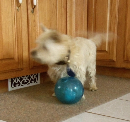 Blurry pic of puppy playing with toy.
