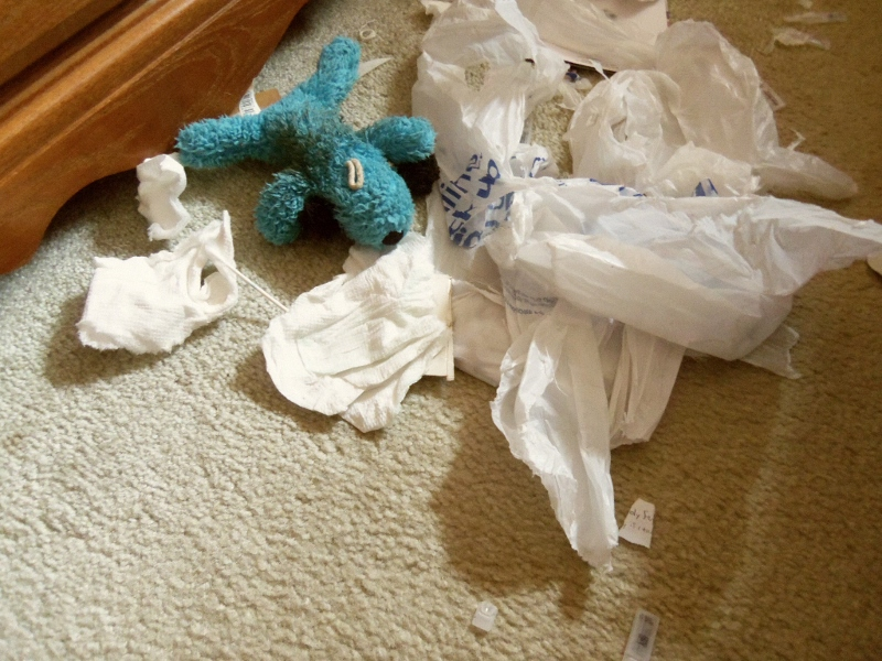 Blue Puppy lies amid the trash can carnage.