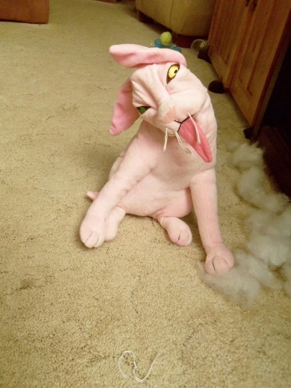 Toy kitty with stuffing ripped out of its head.