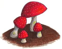 Bright red mushrooms