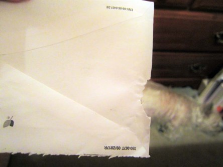 Sleeping Cairn terrier and an obviously chewed envelope.