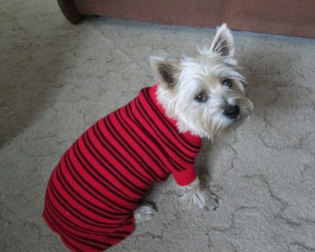 Toby dressed in a striped sweater.