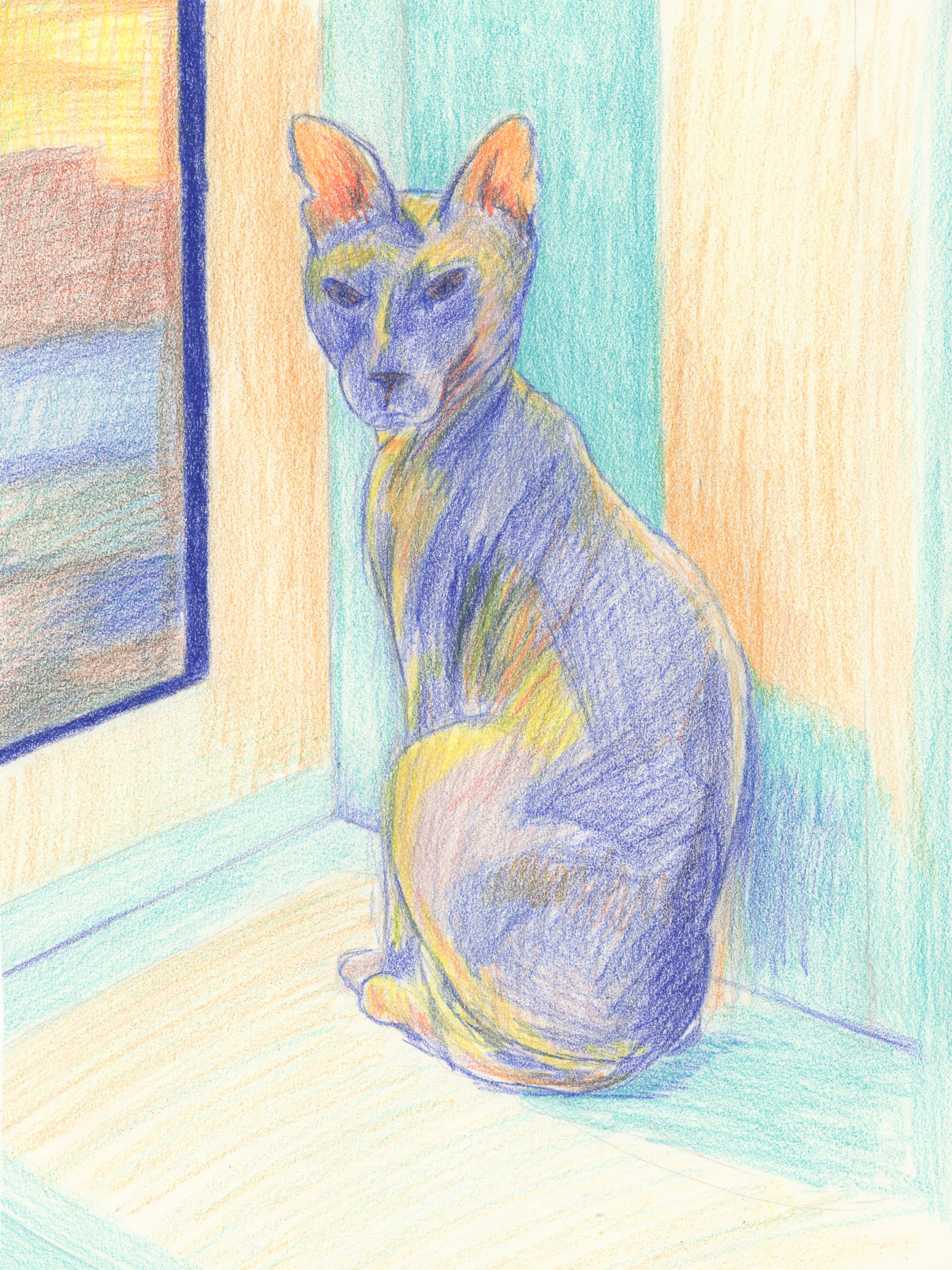Pencil sketch of hairless cat.
