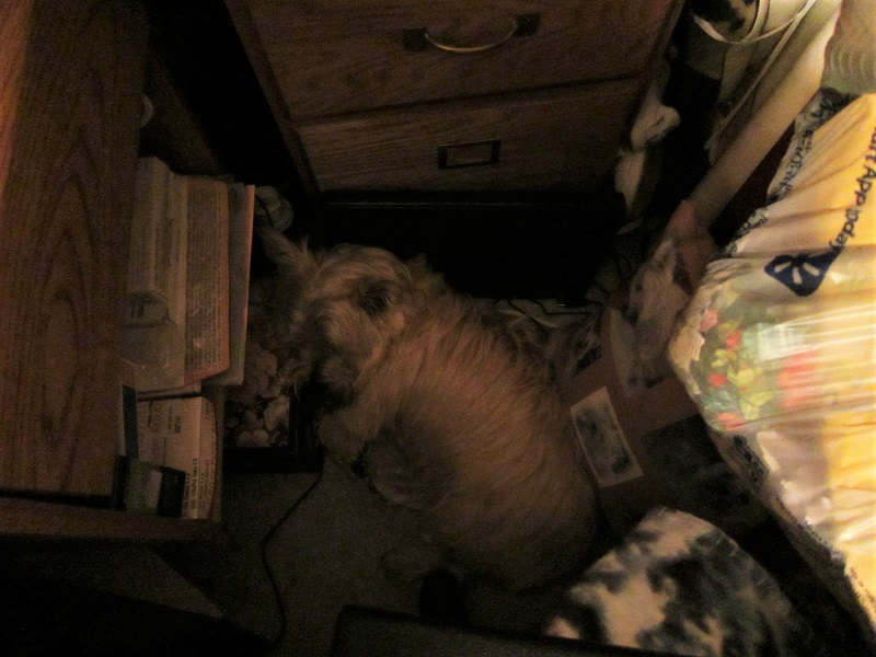 Toby sleeping next to Mommy's desk.