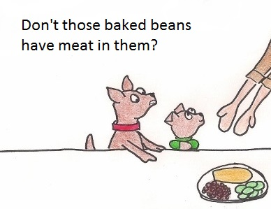 Little dog asks: Don't those baked beans have meat in them?