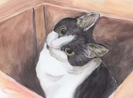 Black and white cat sitting in box