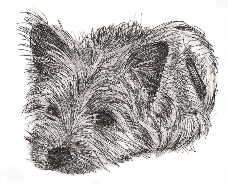 Pen and ink sketch of a Cairn terrier puppy