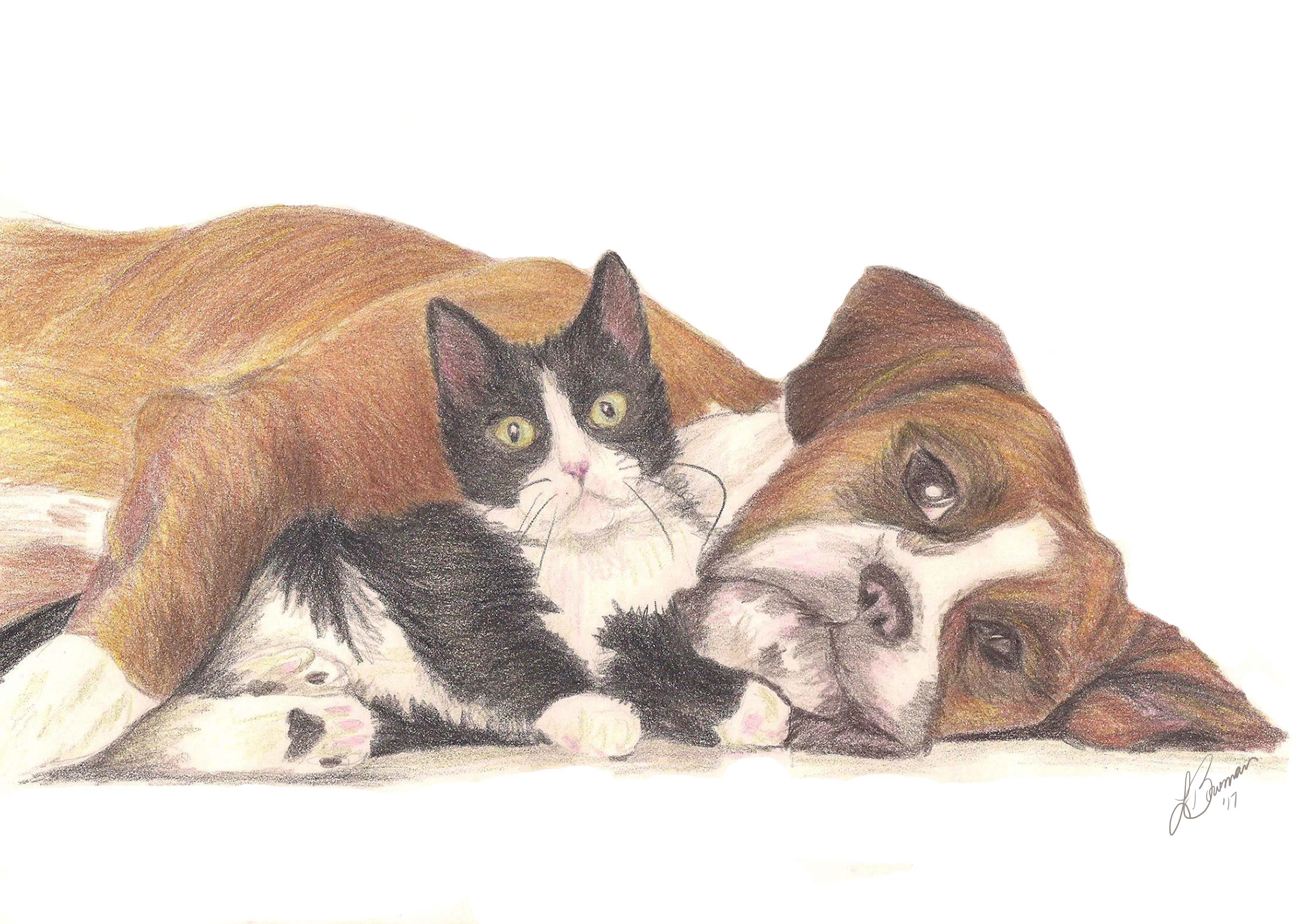 Pencil drawing of a boxer and a kitty lying down beside each other.