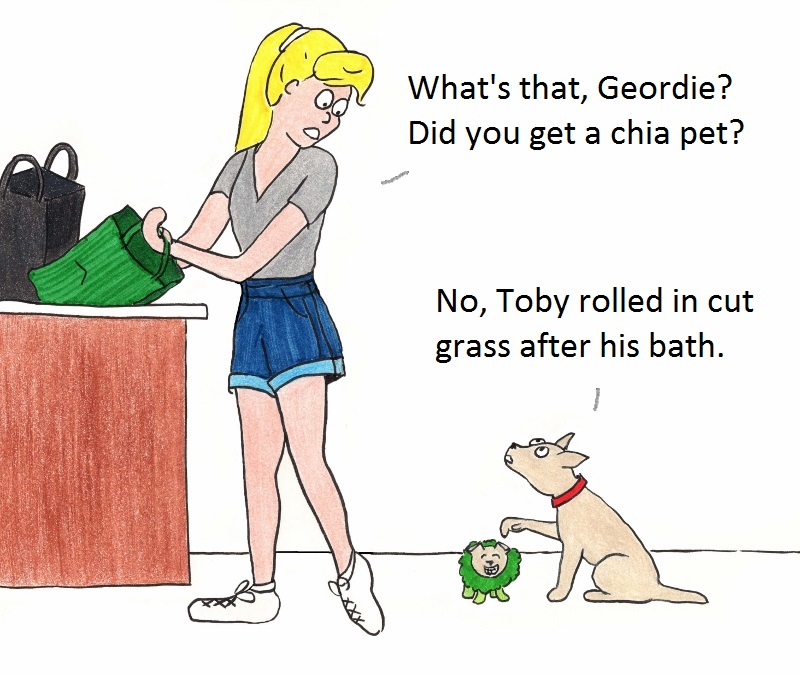 What's that, Geordie? Did you get a chia pet? No, Toby rolled in the grass after his bath.