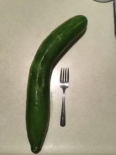 Very large garden cucumber