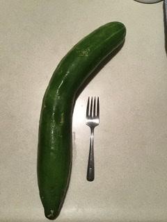 Very large garden cucumber