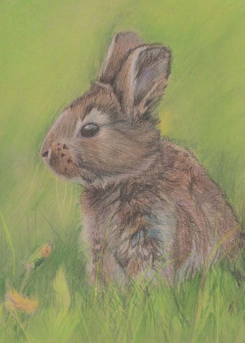 Mixed media sketch of a bunny
