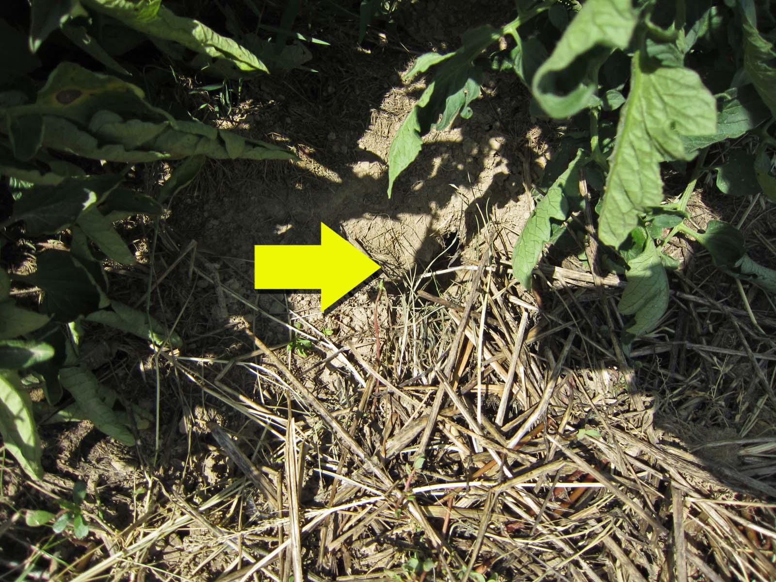 Bunny hole dug into garden
