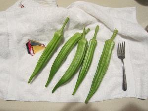 Large garden okra