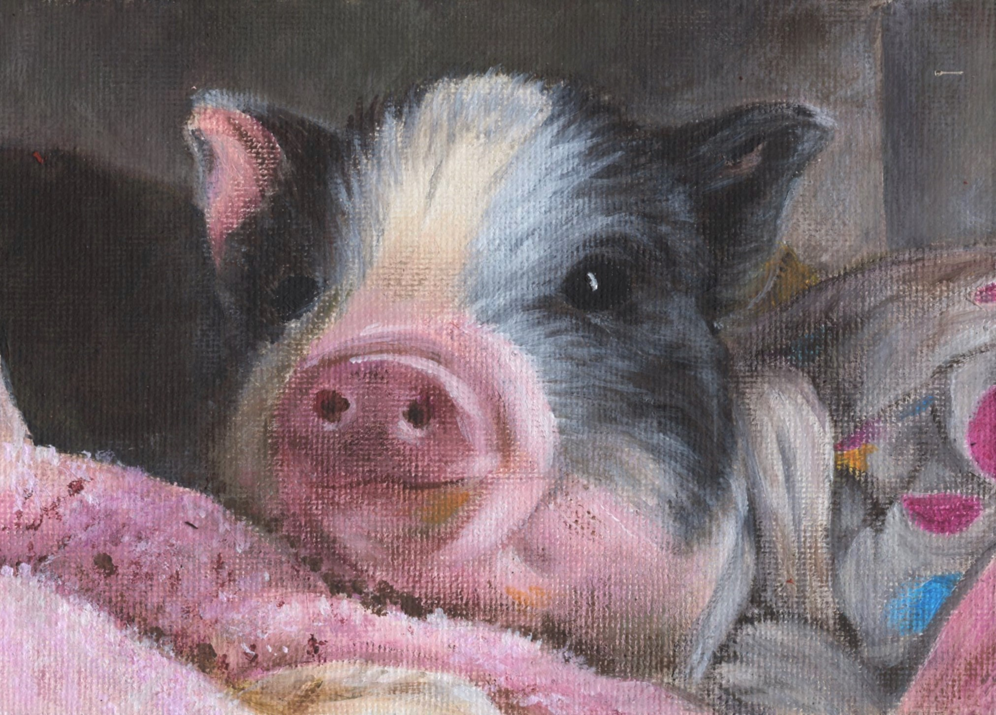 Little pig smiles as she lies on her favorite blanket